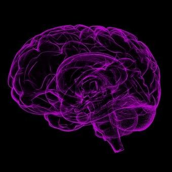 brain-1787622__340.jpg