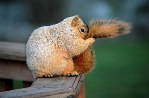 l-My-tail-smells-suspicious.jpeg