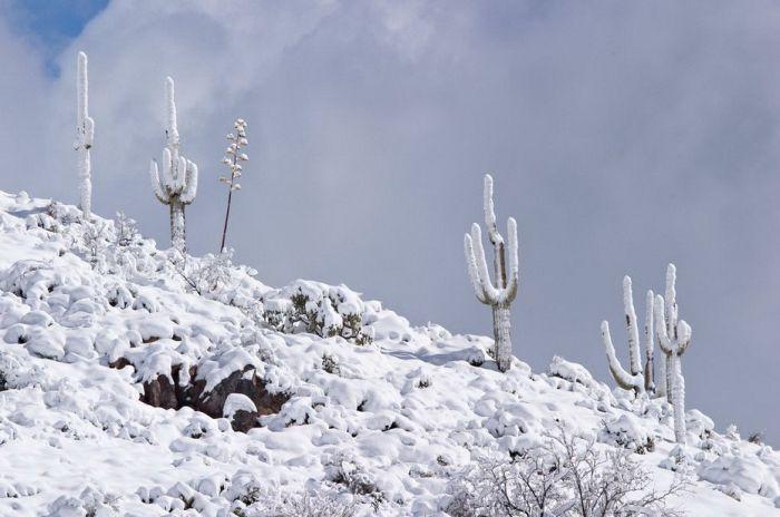 snow-cactus.jpg