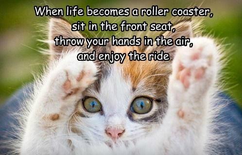 Cat Roller Coaster.jpg