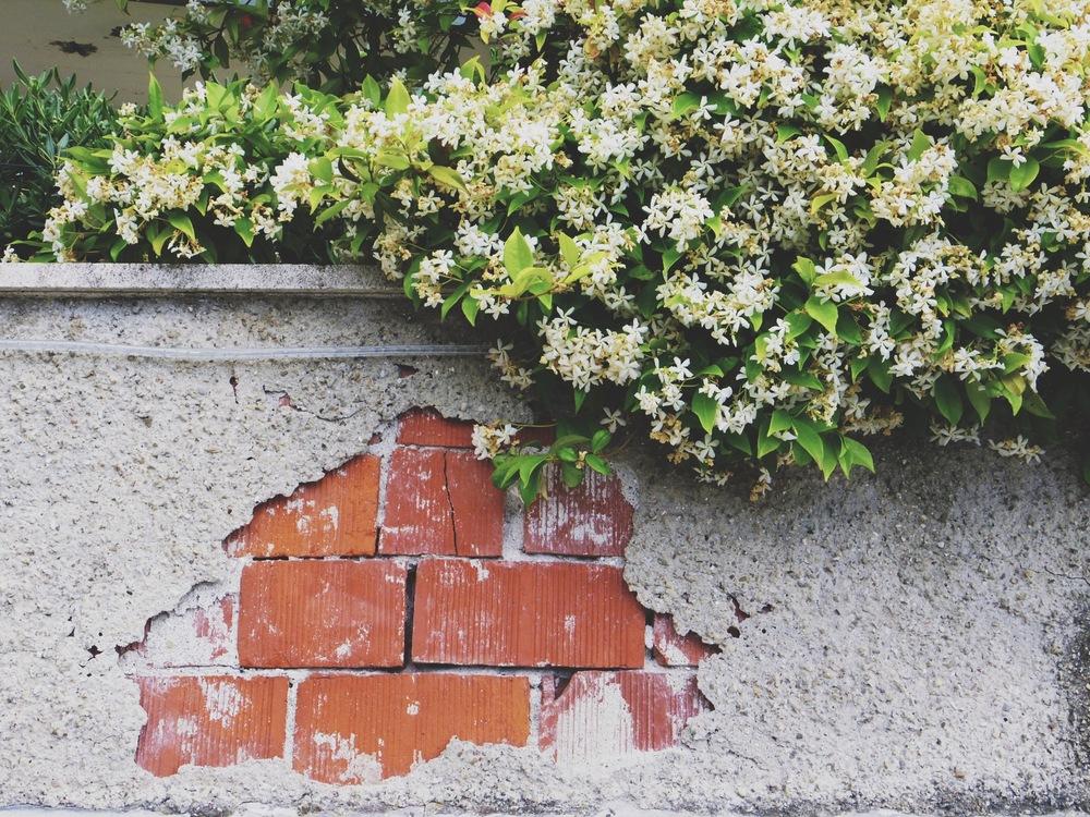 italie-jacinthe-fleur-cinque-terre.jpg