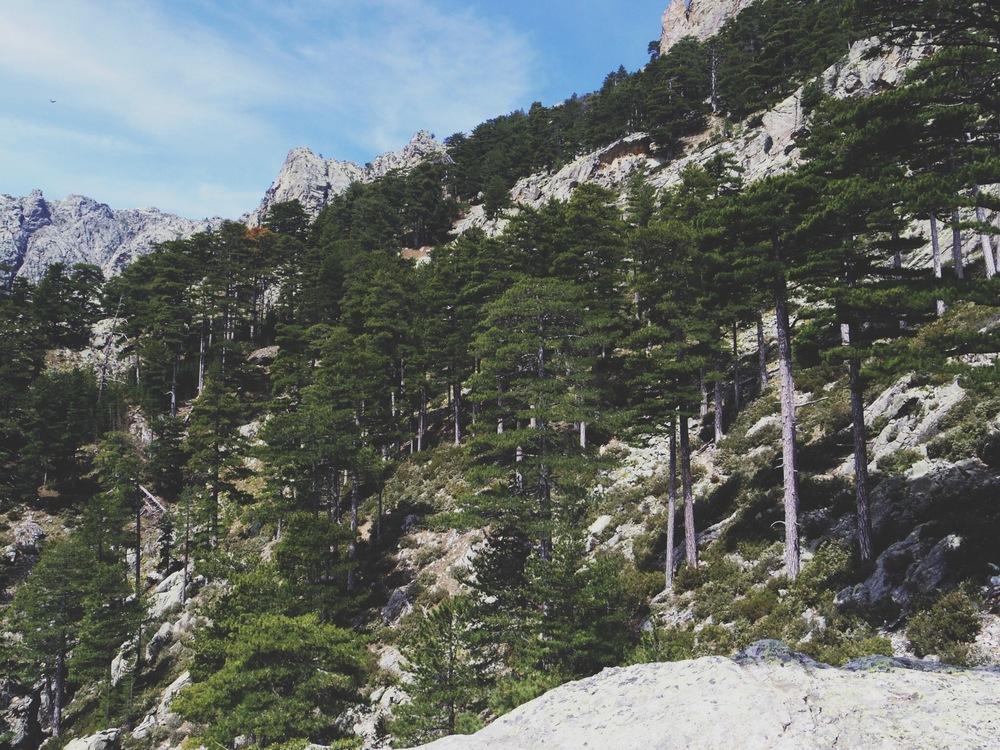montagne-corsica-corti.JPG