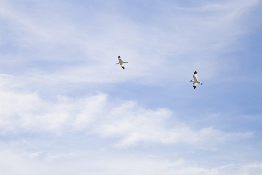 Aigues-mortes-salin-oiseaux-.jpg