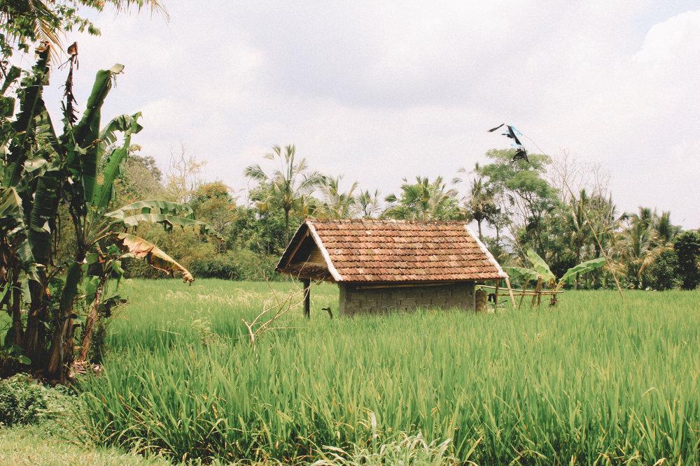 Jatiluwih-balinese-ricefields-blog-onmyway.jpg