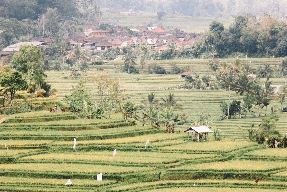 Jatiluwih-Bali-voyage-blog-onmyway.jpg