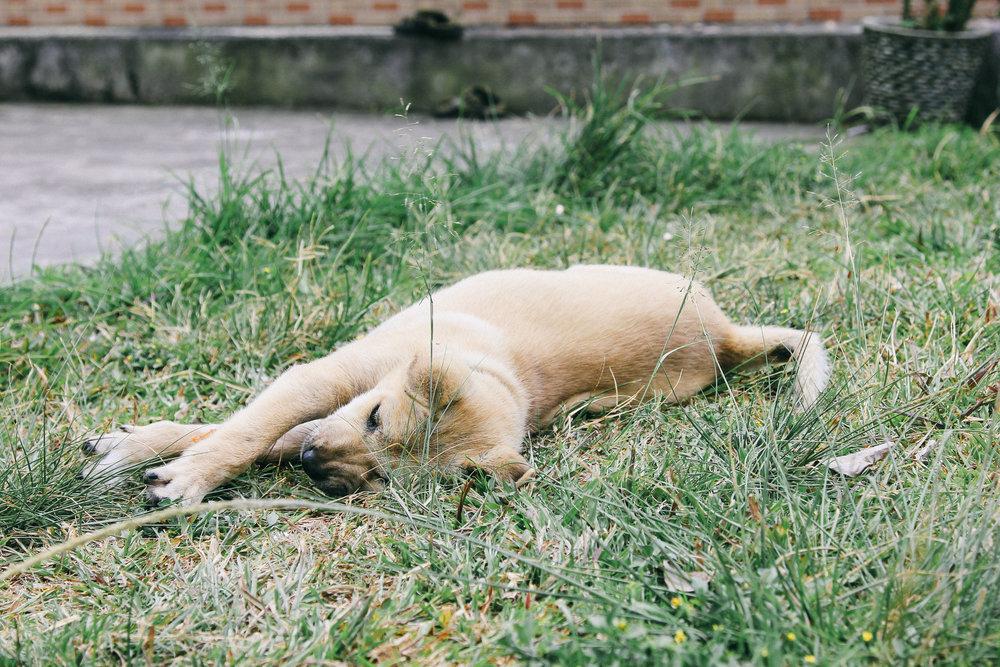 besakih-chien-balinais-blog-onmyway.jpg