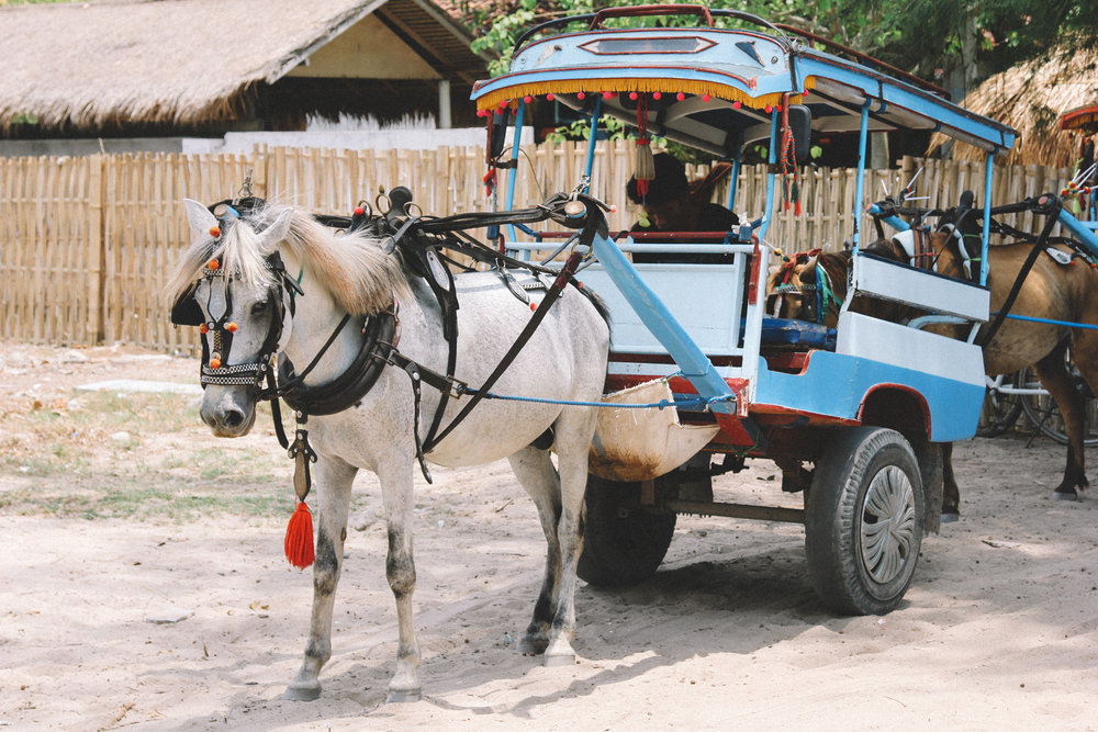 cidomo-lombok-gili-air.jpg
