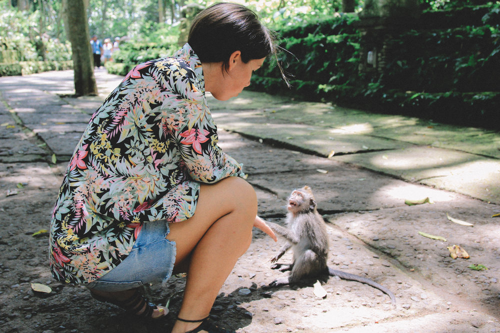 monkey-forest-alex-bali.jpg