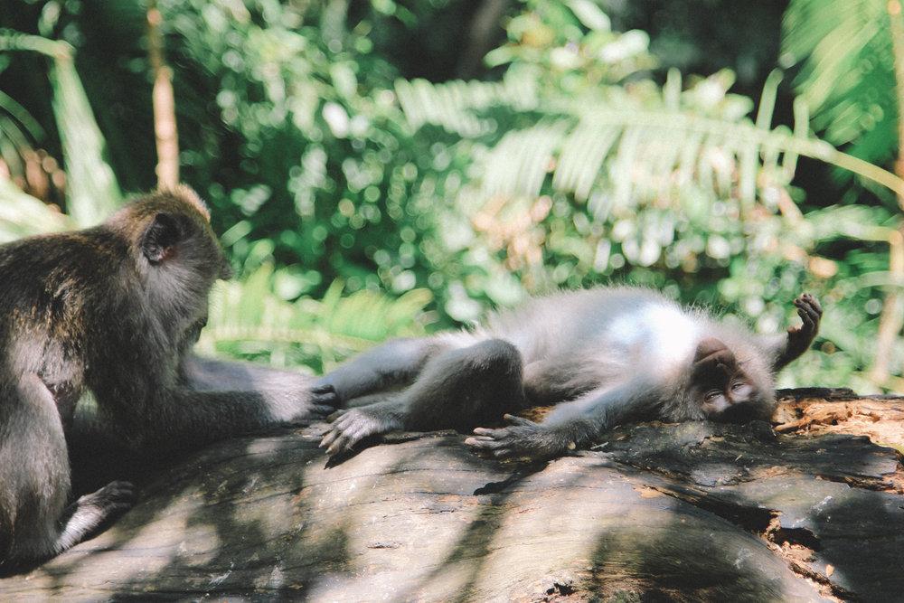 Monkey-forest-bali-onmyway-blog-1.jpg