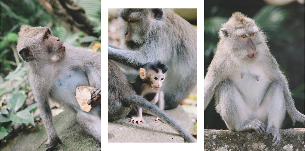 monkey-forest-ubud-bali-indonésie-onmywayFR.jpg