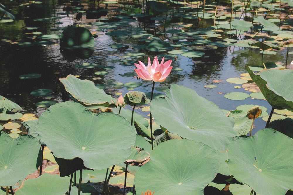lotus-café-bali-ubud-onmywayFR.jpg