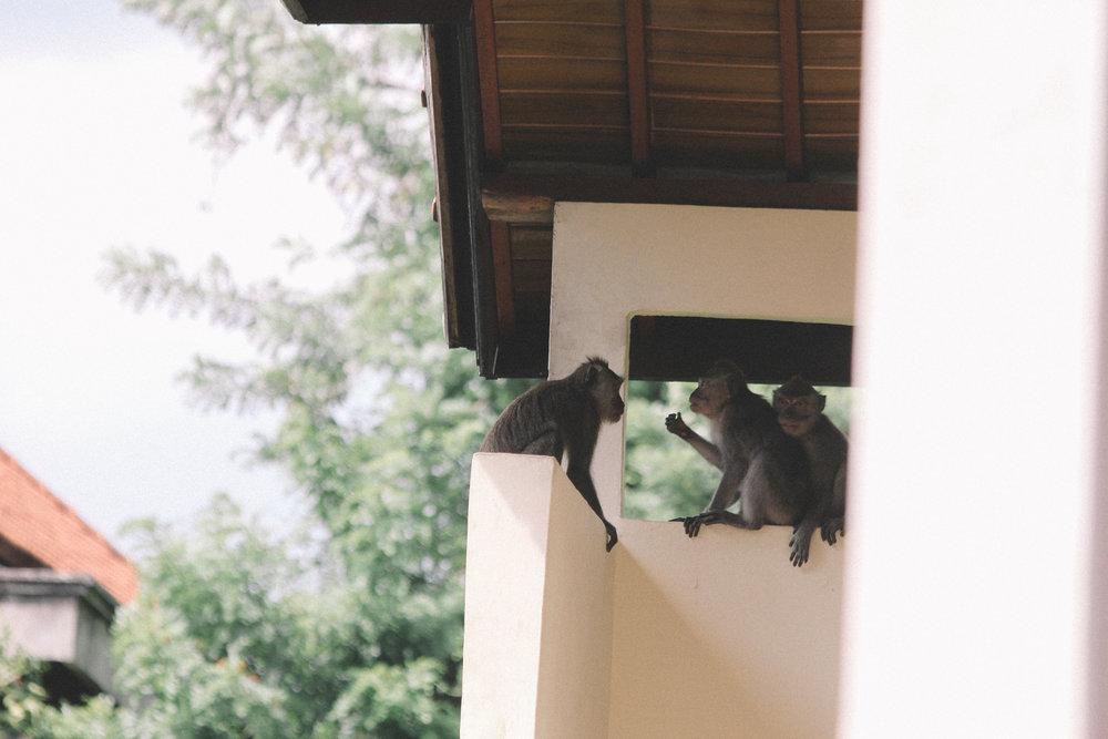 champlung-sari-ubud-hotel.jpg