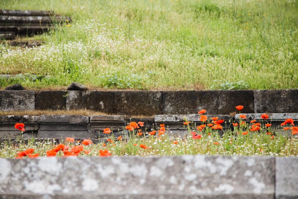 anfiteatro-pompei8.jpg