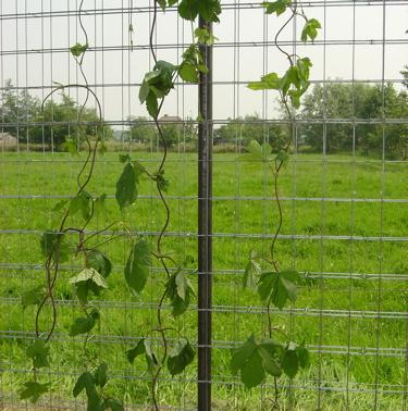 2007017 SISMO S6 Fence - 6.jpg