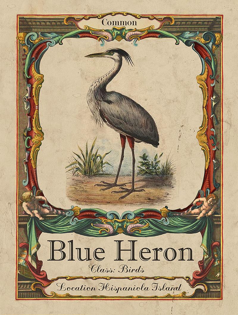 Bird discovery card