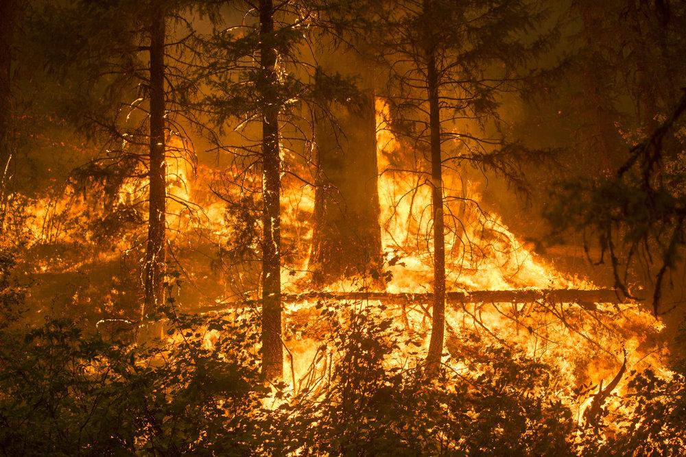 Pioneer Fire Video Update