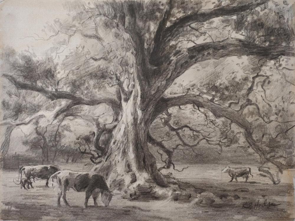 Cows under a Live Oak.jpg