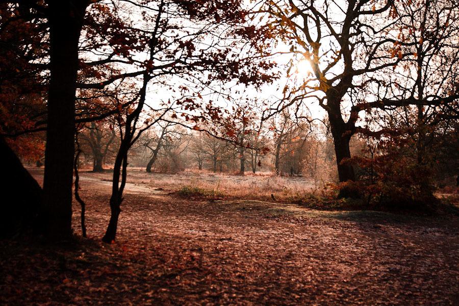 RonVillamor_Landscapes_4.JPG