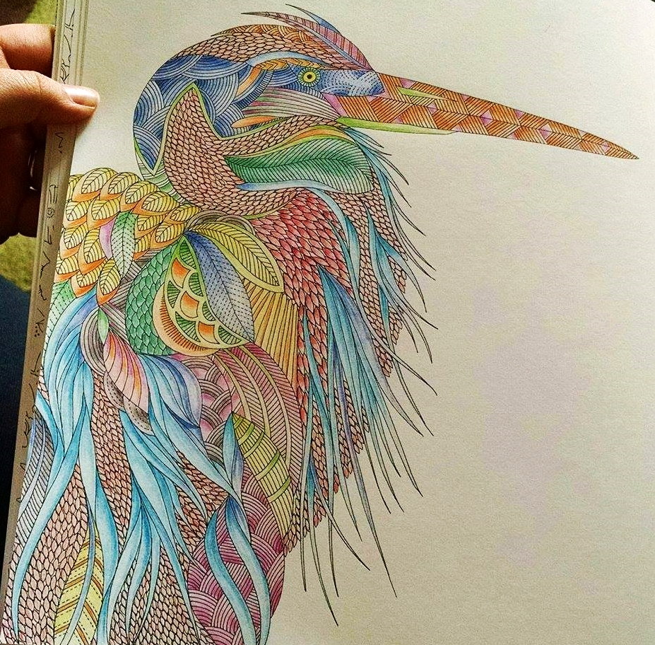 Coloring Books Animal Kingdom : [INTERVIEW] with #MILLIEMAROTTA ILLUSTRATOR OF ADULT COLOURING BOOKS with Culture Toronto and ...