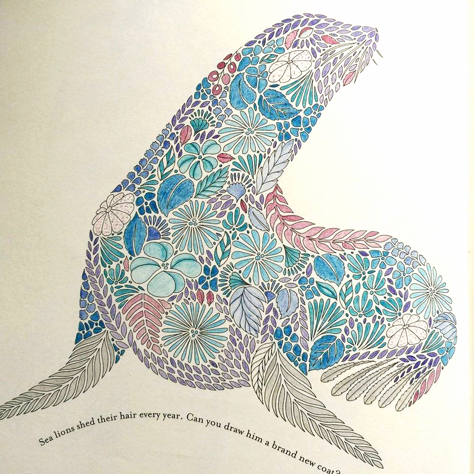 Coloring book animal kingdom - Seal Jpg