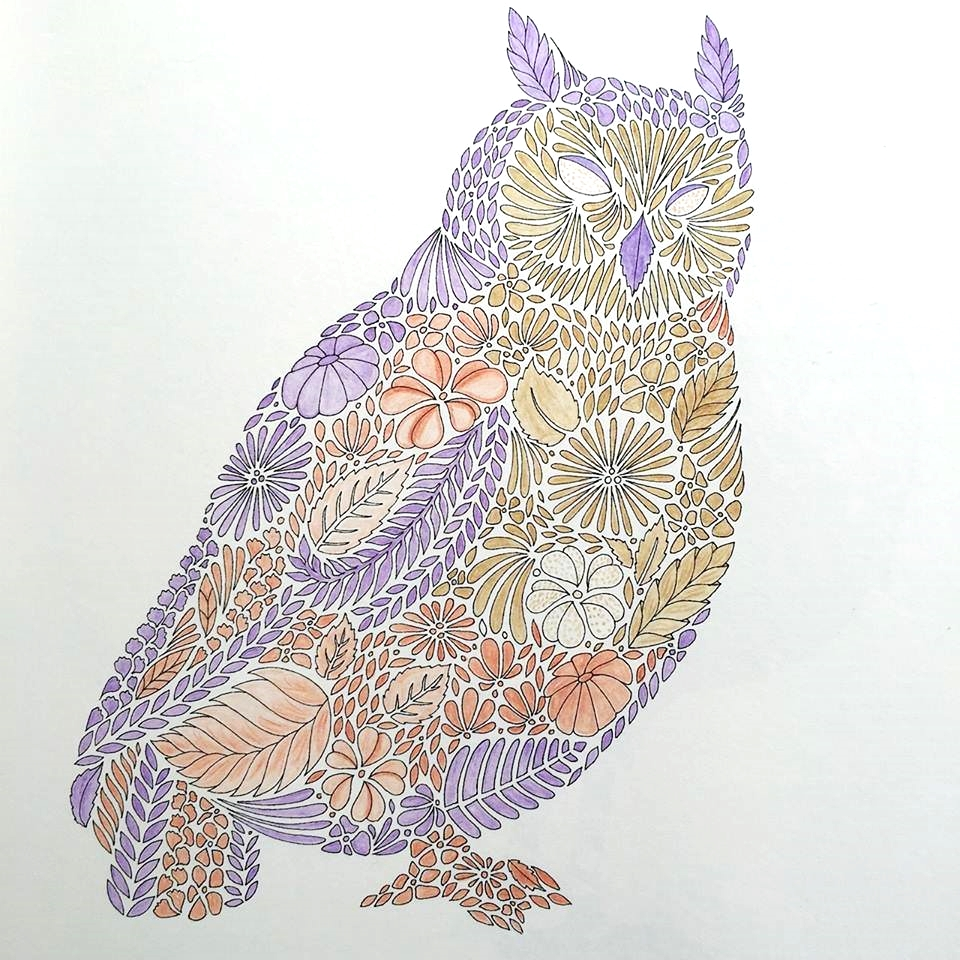 Coloring book animal kingdom - Owl Jpg