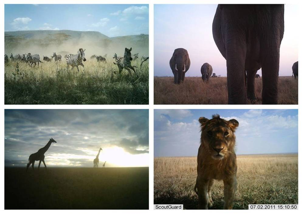 Credit: Park National du Serengeti