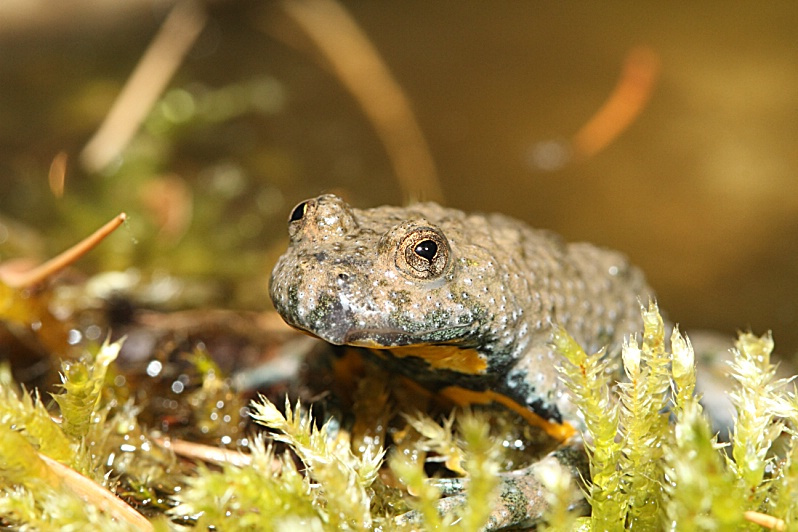 Biodiversite des forets 4.png