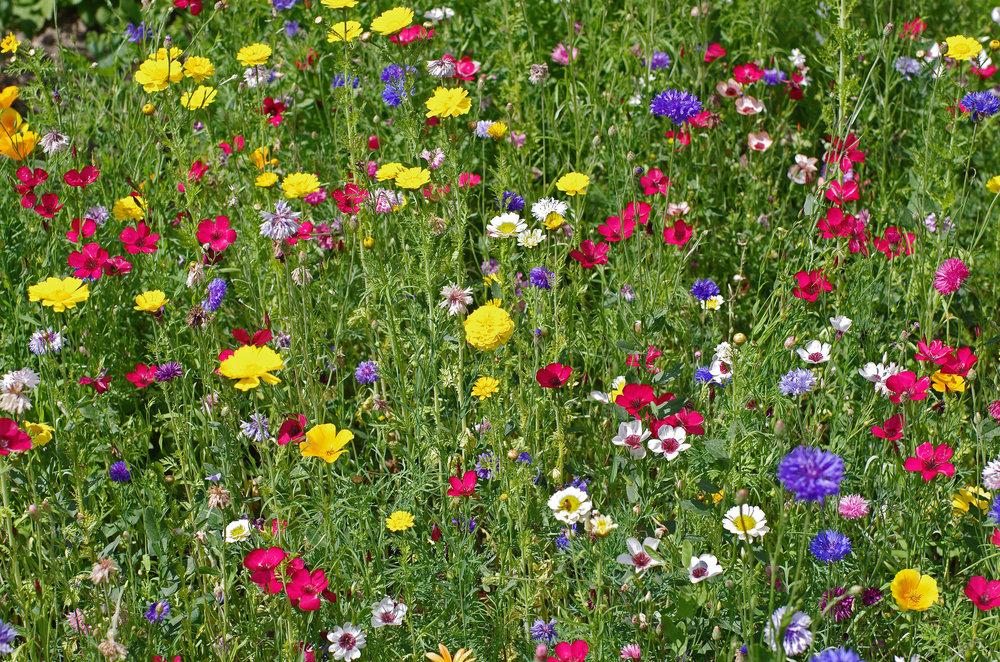 Prairie fleurie gérée par un logiciel de plan de gestion différenciée La gestion différenciée n'a réellement pris d'ampleur en France qu'à la suite de colloquescomme celui qui s'est déroulé en 1994, intitulé : « Vers la gestion différenciée des espaces verts ». Elle est pourtant une pratique courante dans les pays d'Europe du Nord.