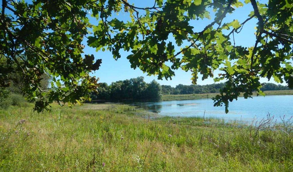 Balade biodiversité - Ecobalade - Crédit RNN la Bassée
