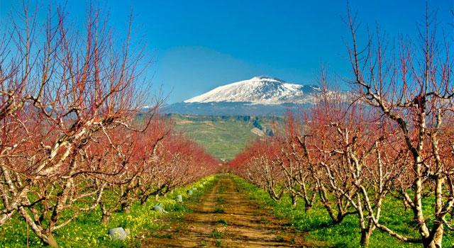 Sicily's contrasting colors - image from scoprirelasicilia.com
