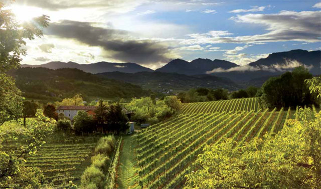 Vineyard in the Conegliano Valdobbiadene area - photo by Francesco Galifi
