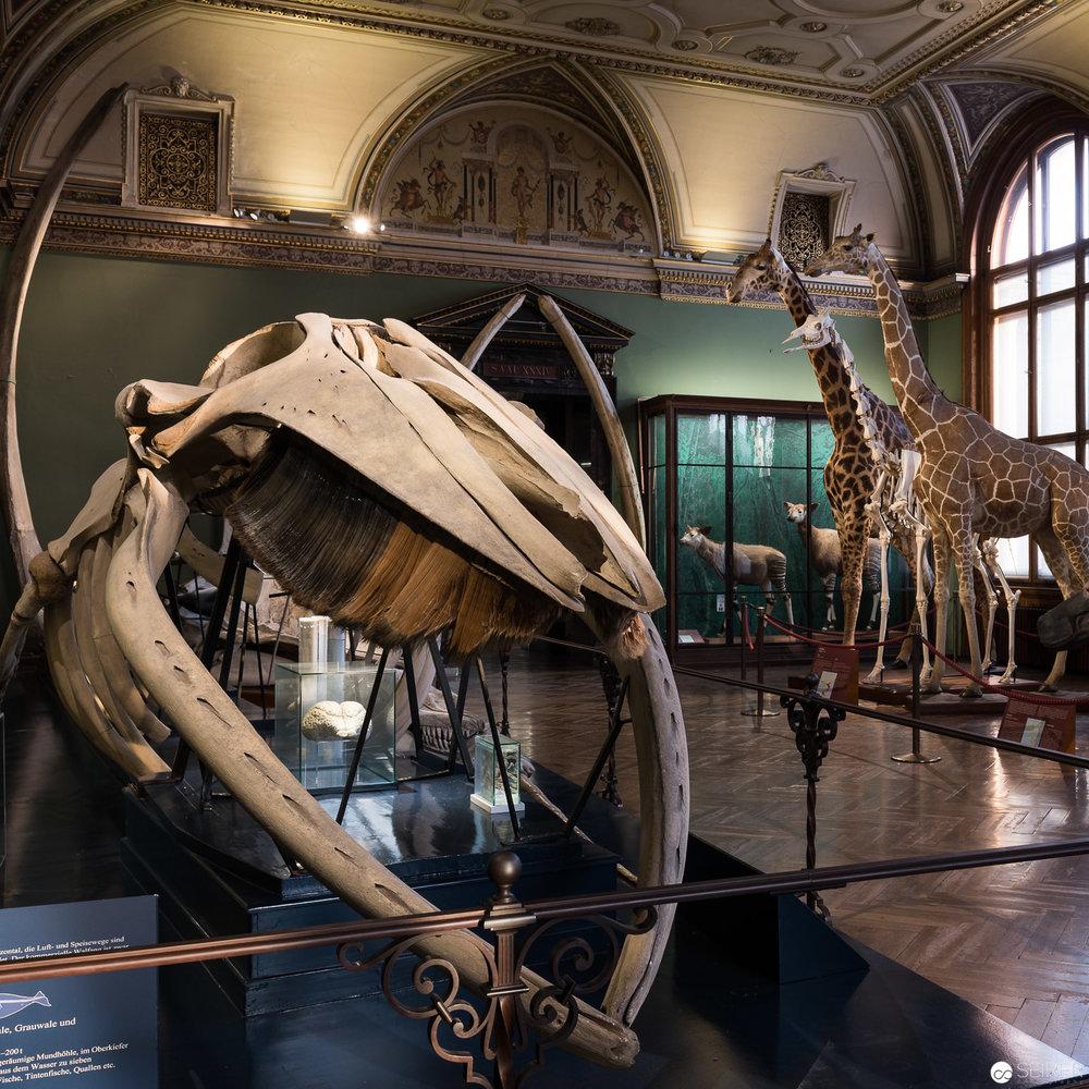 """Fotografien von """"Natura Morta"""" im Kontext der Exponate des Naturhistorischen Museums in Wien"""