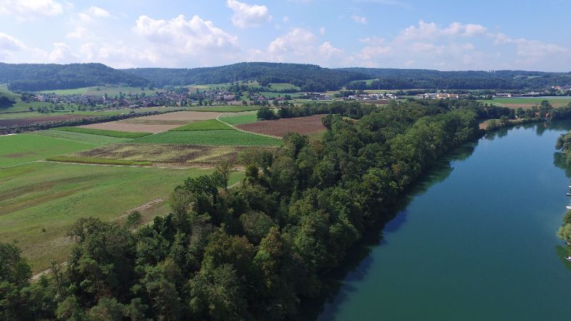 Rhein abwärts.jpg