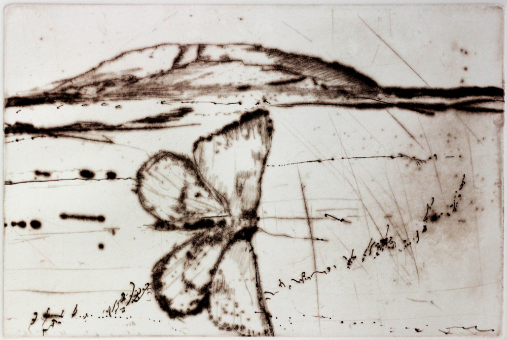 WA Moth 2011