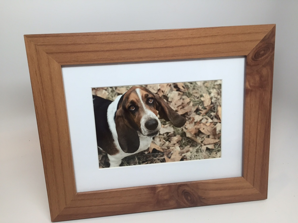 A photo of my friend's beloved basset hound I had been wanting to send FOREVER.
