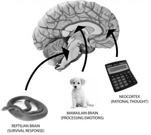 the-three-brains.jpg