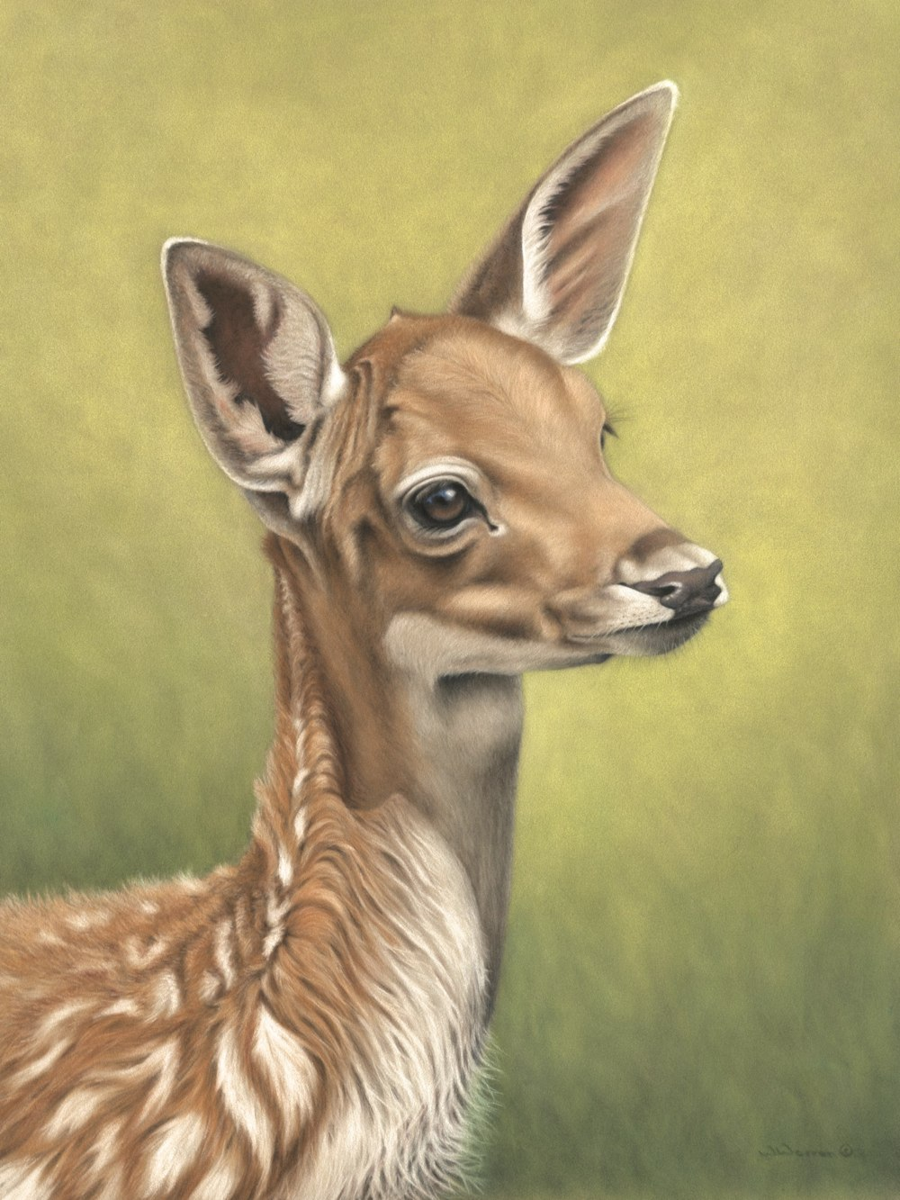 Fallow Deer Fawn  by Wendy Warren
