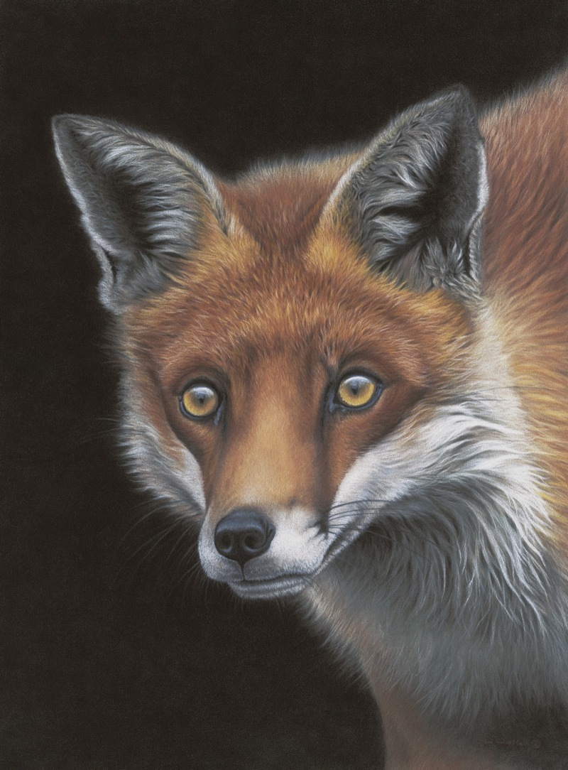 Vixen  by Wendy Warren
