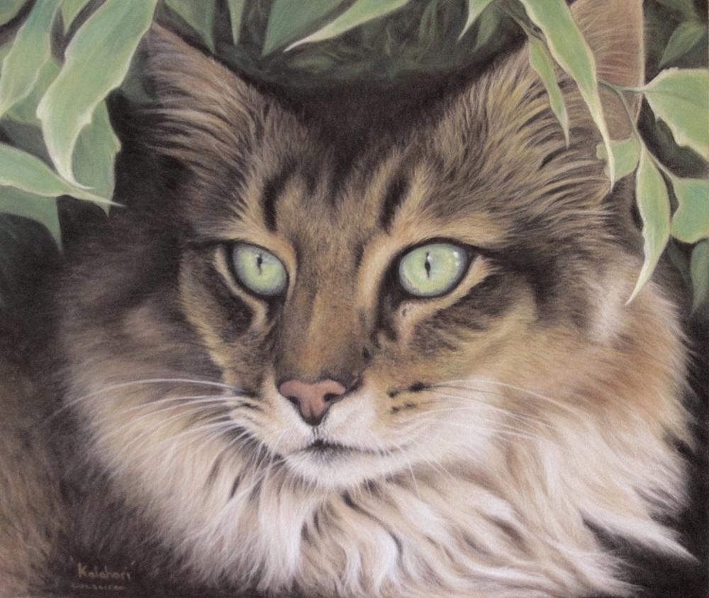 Kalahari by Wendy Warren