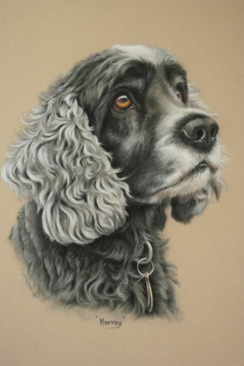 Harvey  by Wendy Warren