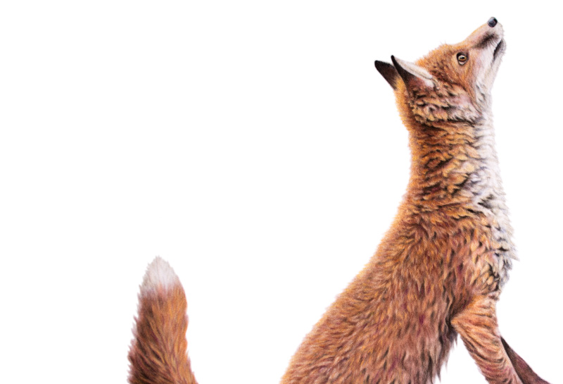 fox-cub-original.jpg