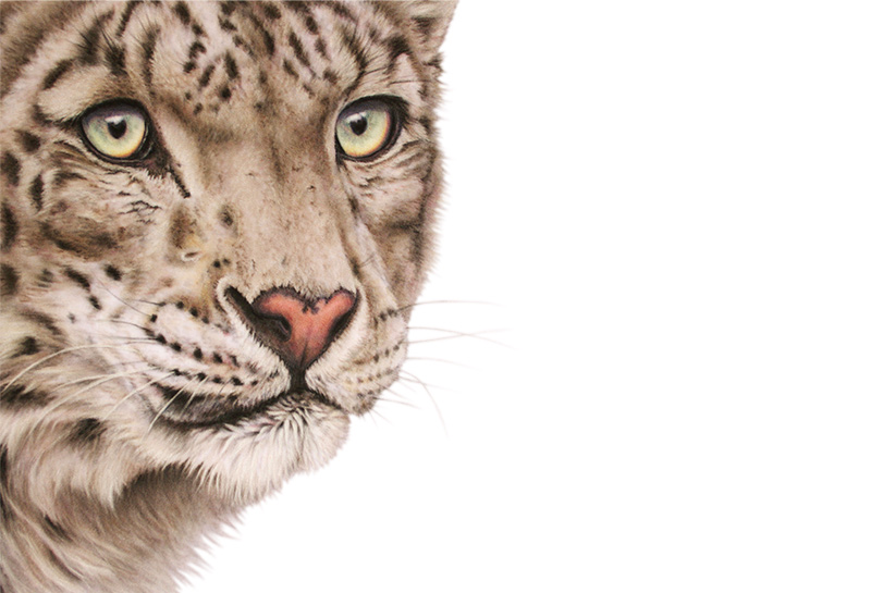 snow-queen-snow-leopard-original.jpg