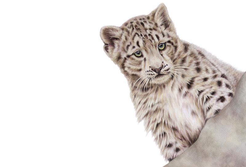 snow-cub-original.jpg