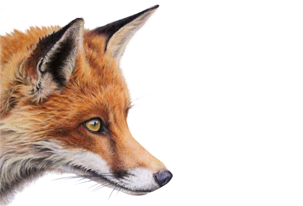 The Vixen by Wendy Warren