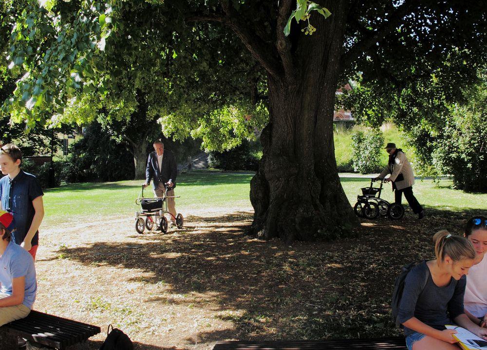 Test der neuen Rollatoren im Herzen Uppsalas. Unter einer mächtigen Linde beim Dom der schwedischen Universitätsstadt geht es sicher über Gras und Kies...