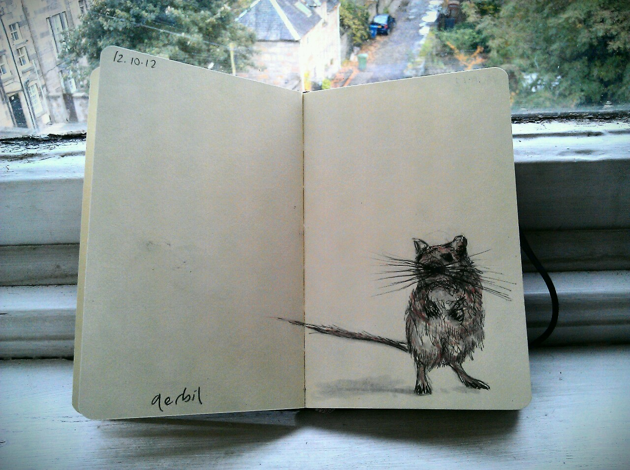 365 drawings later … day 255 … gerbil