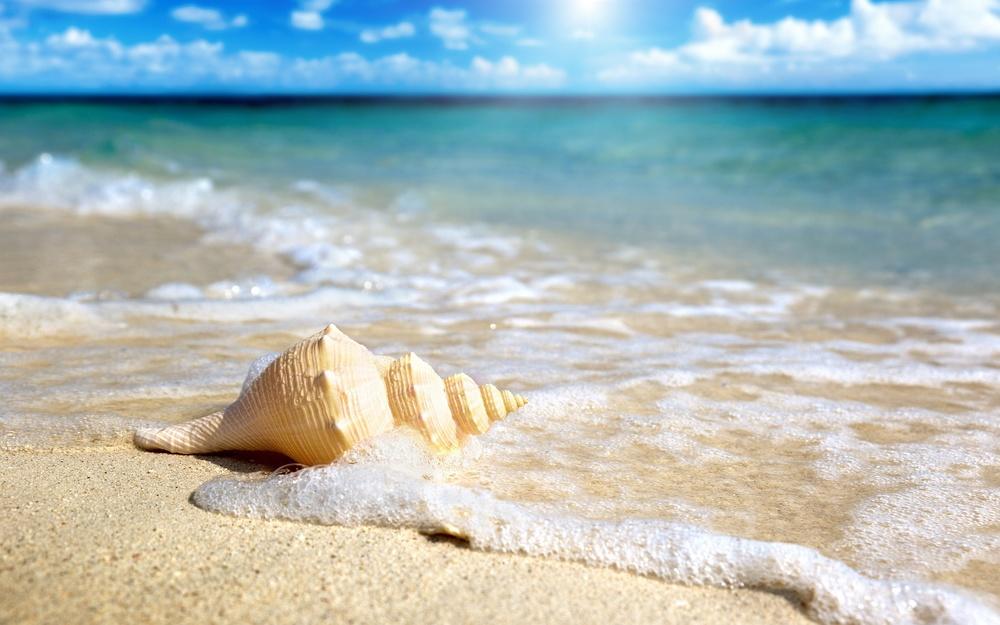 Beach-Shell.jpg