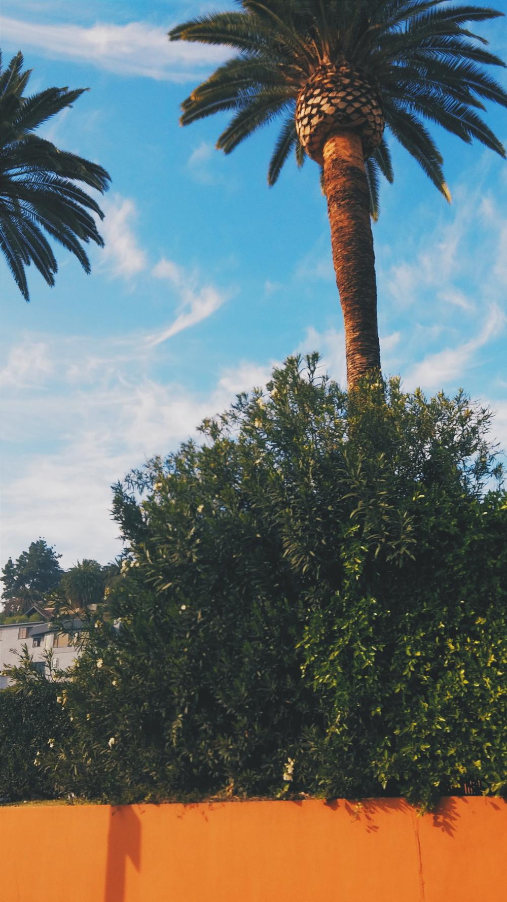 Palmtrees2015