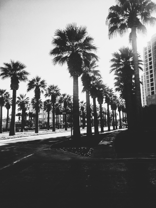 I got a thing for palm trees.