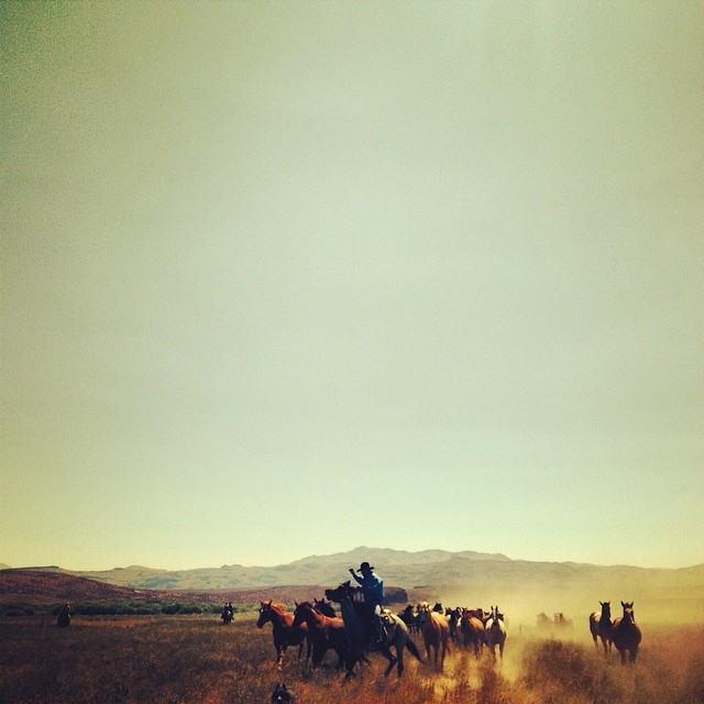 #hoofbeats on the #horizon. #gowest #travelnevada
